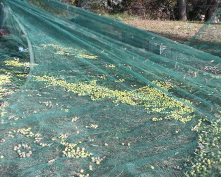 New HDPE Harvest Collect Olive Net with UV (YHZ-HON01)
